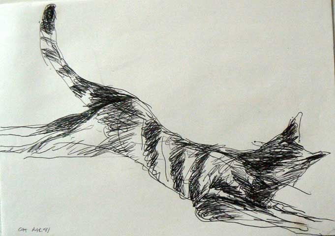 Cat drawing by Ronald Rae